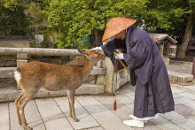 Sika de Nara